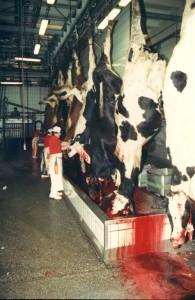 Il consumo eccessivo di carne e la prostatite