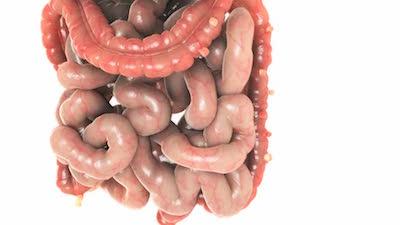 Prostatite e Colite: l'Influenza delle Condizioni Esterne