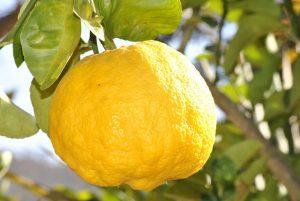 prostata come un limone