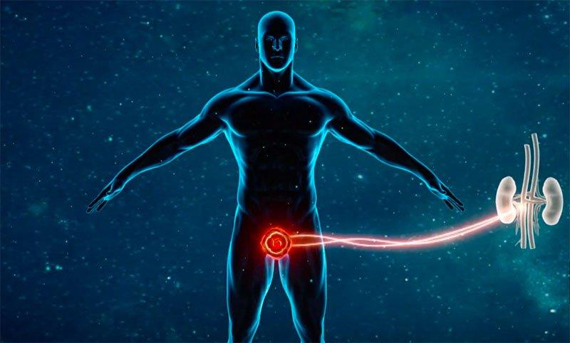 primo chakra prostata